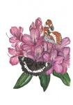 Kleine ijsvogelvlinder-14155