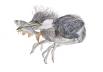 Blauwe reiger-jong-met vis-10777