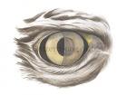 Buizerd-oog-10627
