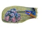 IJsvogel met jongen-10556