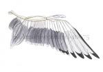 Kokmeeuw-vleugel-10675