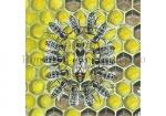 Honingbij-koningin omringd door werksters-14450