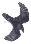 Raaf-vlucht-10634
