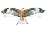 Rode wouw-vliegbeeld-10650