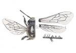 Honingbij-vleugel-14512-1