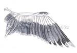 Zilvermeeuw-vleugel-10662