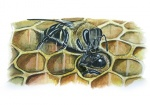 Honingbij-werkster voed dar-14577