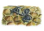Honingbij-werkster voed werkster-14575