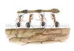 Mieren-samenwerken-140060
