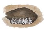Rode bosmier-eitjes-14356