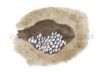 Zwarte wegmier-eitjes-14348