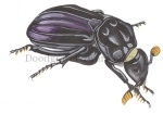 Doodgraver-zwart-14436